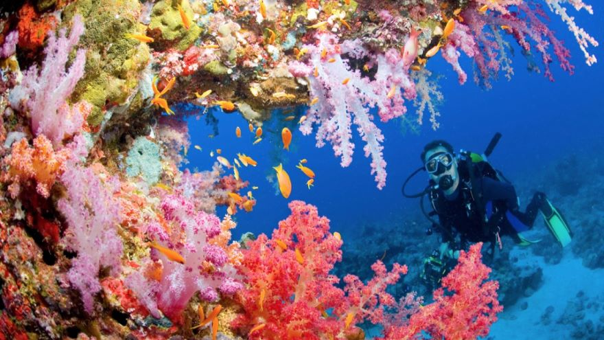 Diving In-The Ocean Adventure