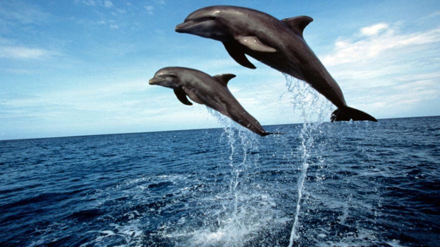 Marine Birds, Reptiles, and Mammals