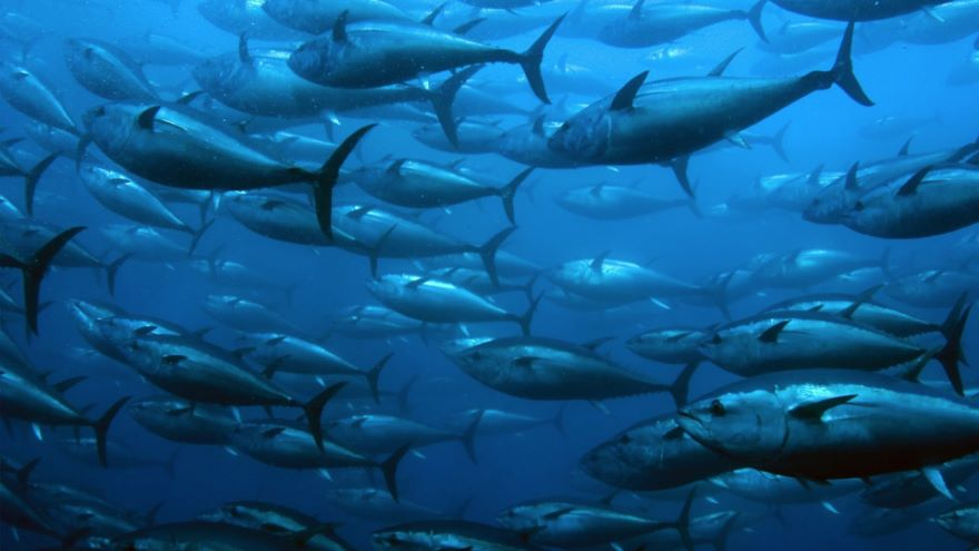 Whaling, Fisheries, and Farming the Ocean
