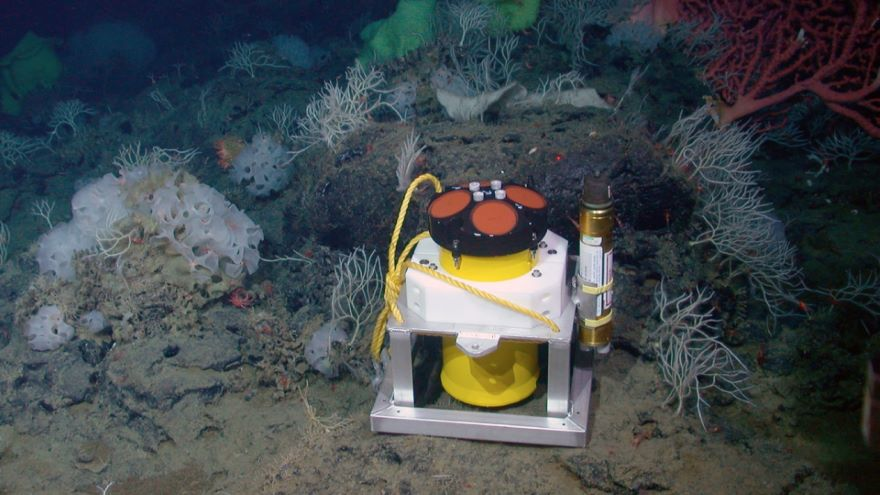 Deep Bottom Life and Hydrothermal Vents