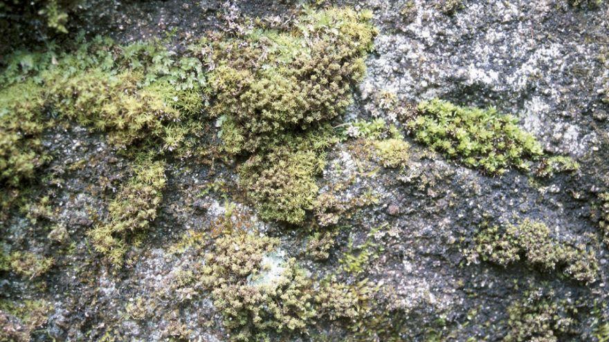 Between Rodinia and Pangaea-Plants on Land