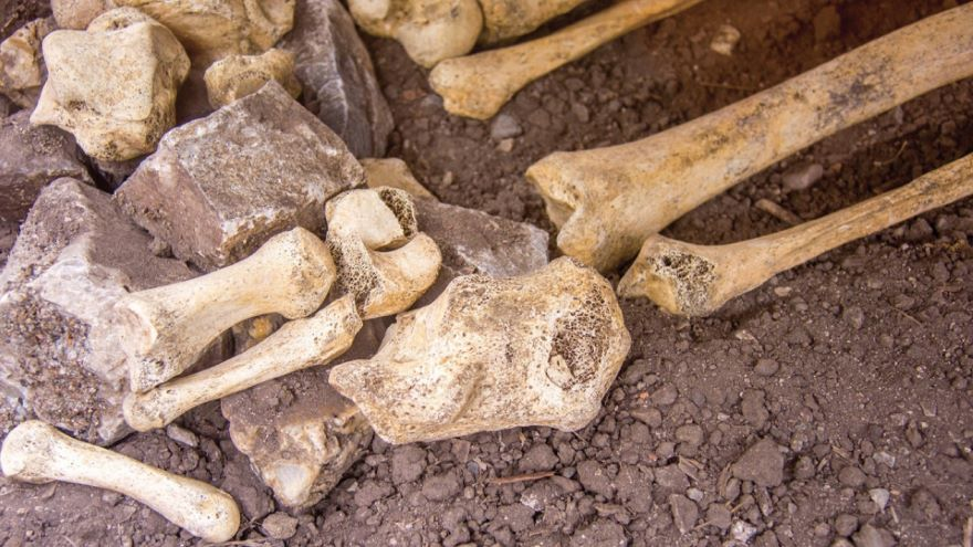 Stones, Bones, and Teeth