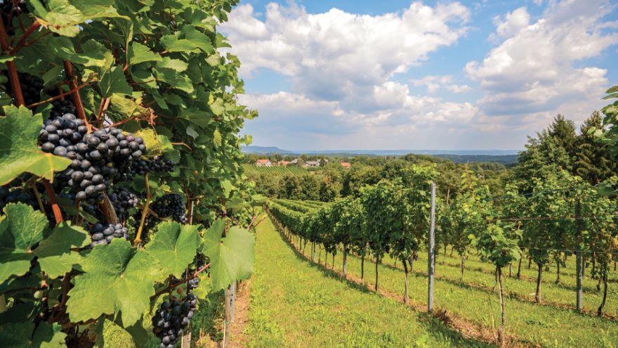 Humanity's Love of Wine