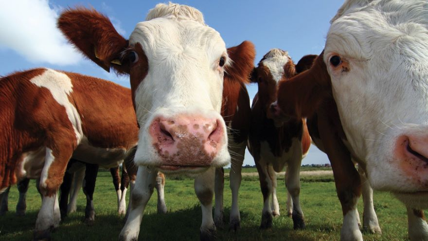 Should the World Eat Meat?