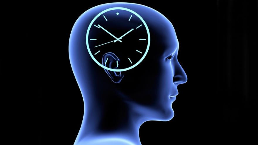 The Wheels of the Circadian Clock