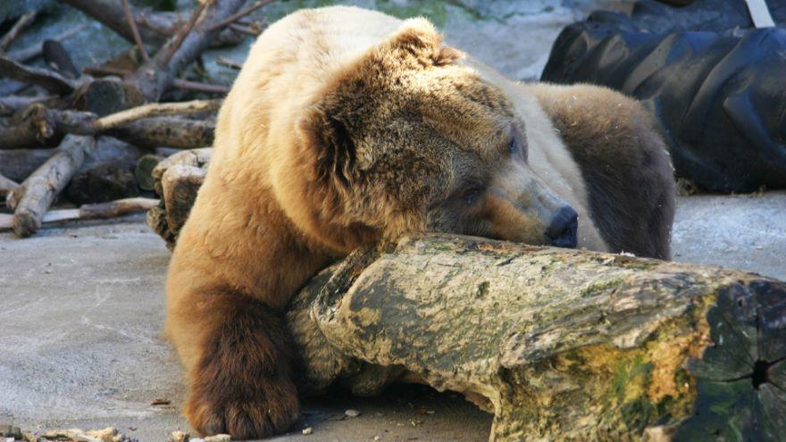 The Deep Sleep of Hibernators