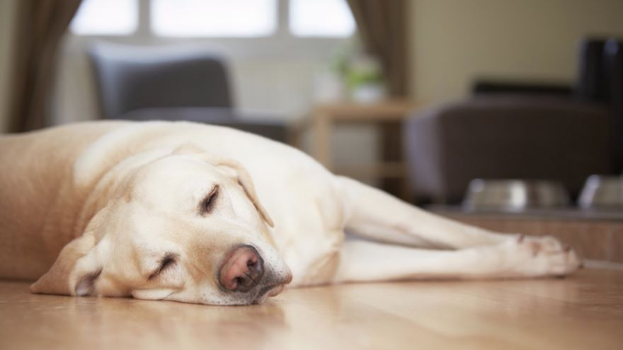 Sleep Disorders-Narcolepsy