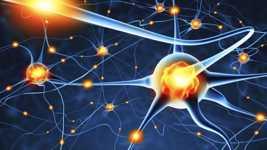 Functions of Sleep-Fueling the Brain