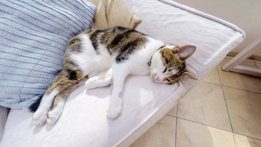 Sleep and Memory in Animals