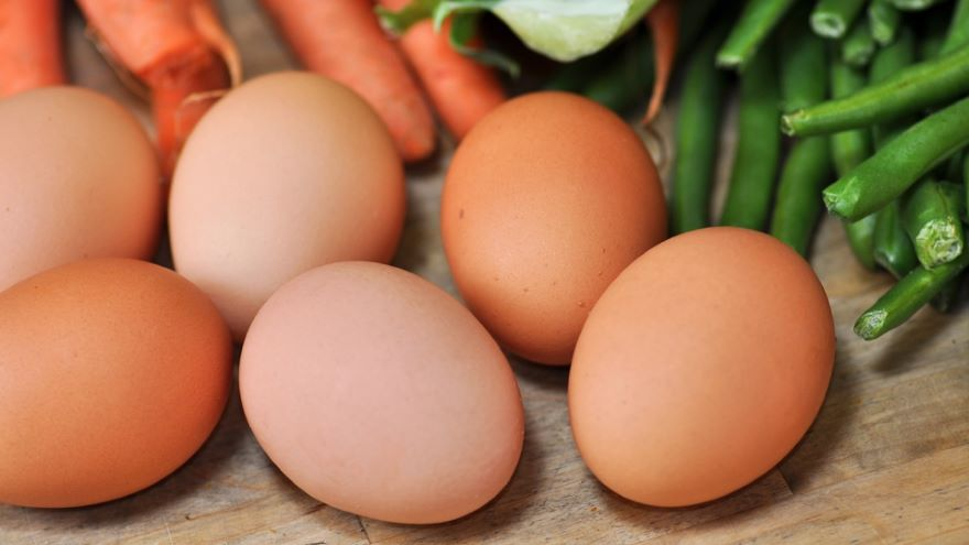 Protein-An Indispensable Nutrient