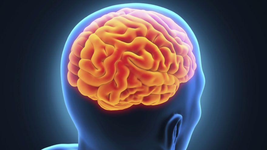 Keeping Your Whole Brain in Peak Condition