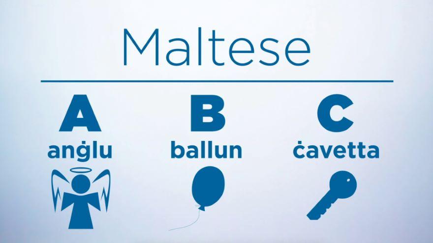 M for Maltese