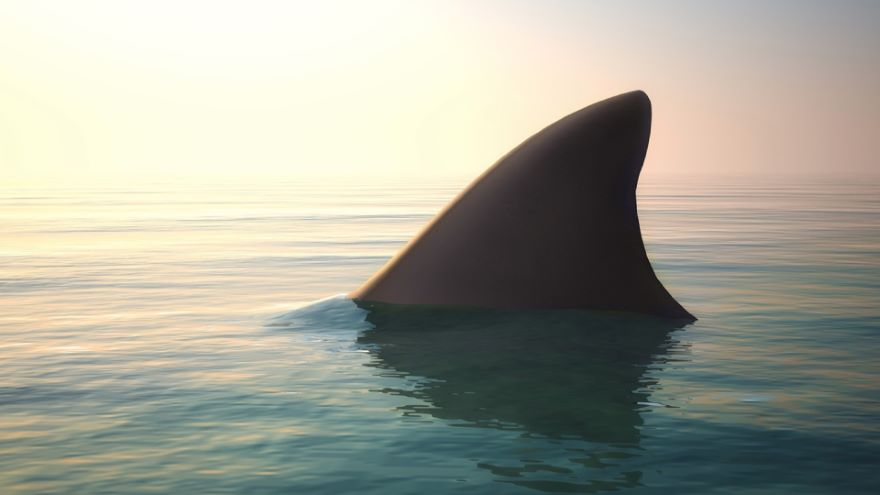 Suspense and Relief: Jaws