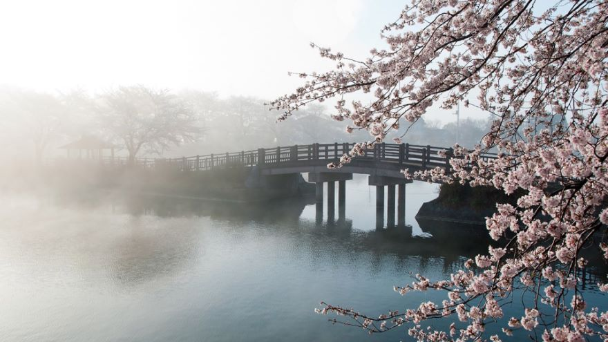 Japanese and Latin American Mysteries