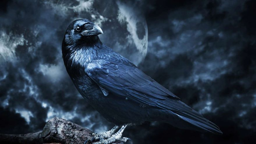 Poe—Genres and Degrees of the Fantastic