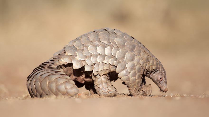 Africa's Small Mammals