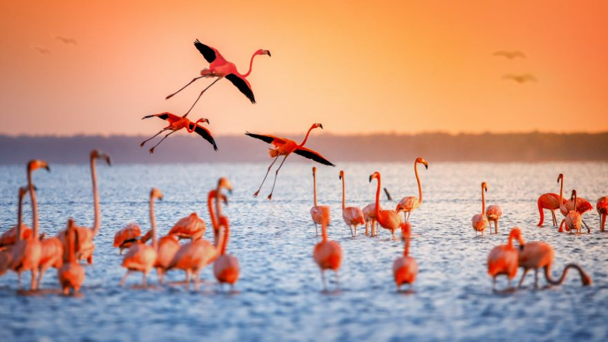 Key Birds of Africa