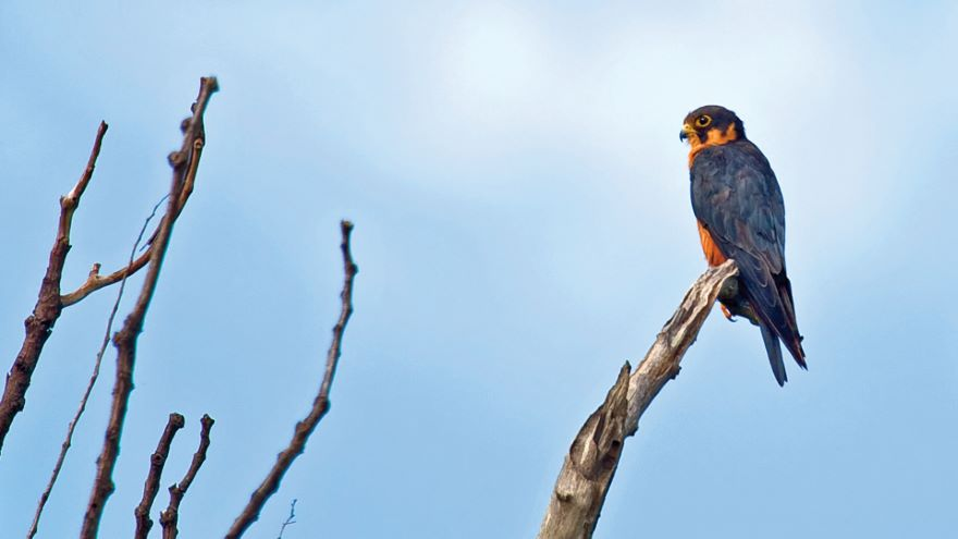 Top Birding Spots of Southern and East Africa