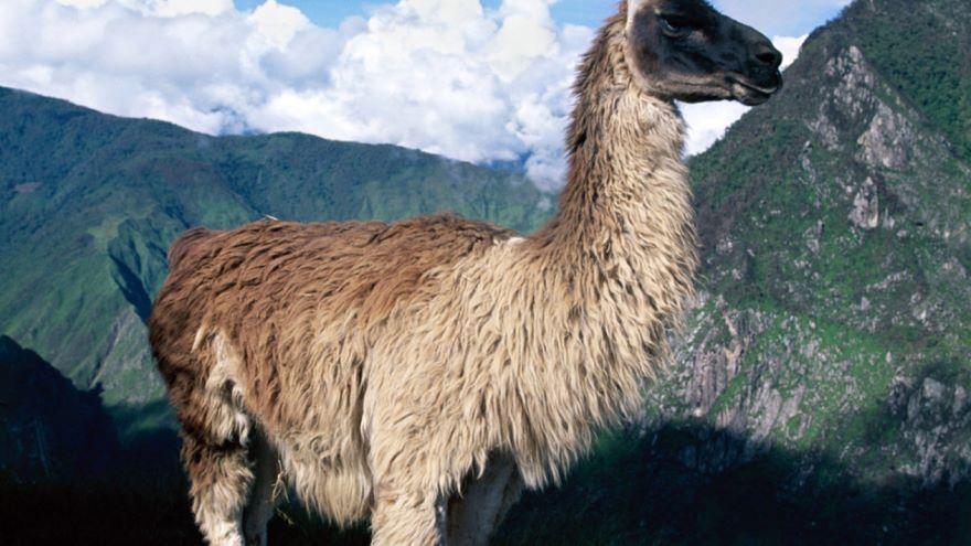 Discovering Peru's Earliest Cities