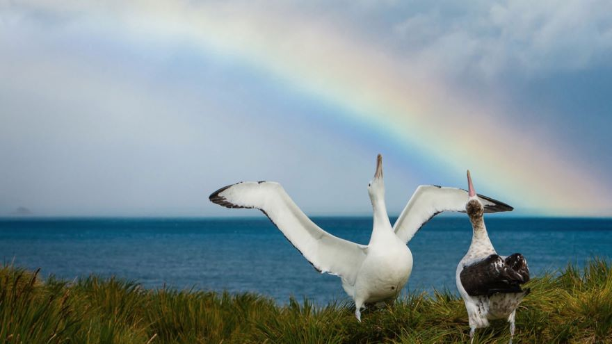 Seabirds of the Arctic and Antarctic