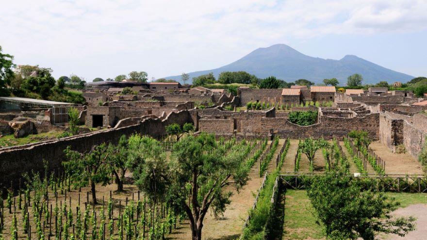 Pompeii's Wine and Vineyards