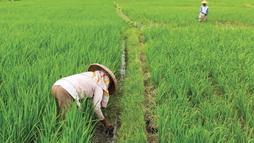 Rice, Silk, and Tea: South China's Peasants