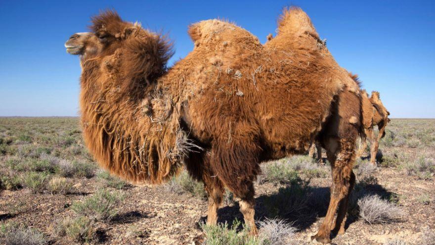 Trade across the Tarim Basin