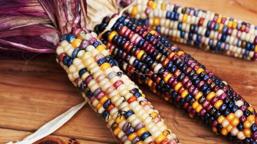 Blood and Corn-Mayan Civilization