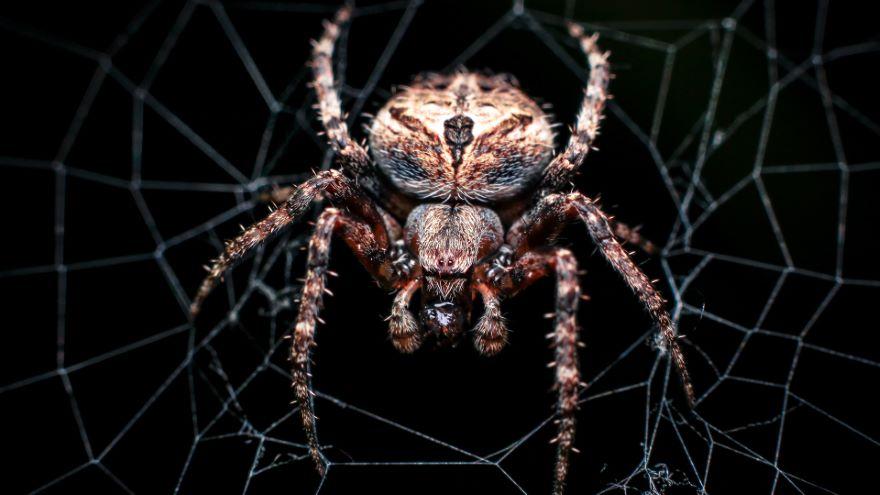 Understanding Specific Phobias