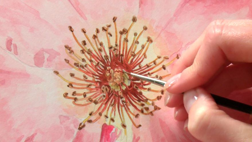 Painting the Stamen & Reassessing Petals