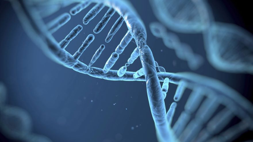 Genes and Identity