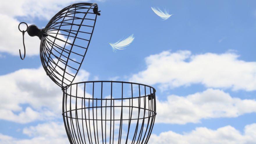 The Idea of Freedom