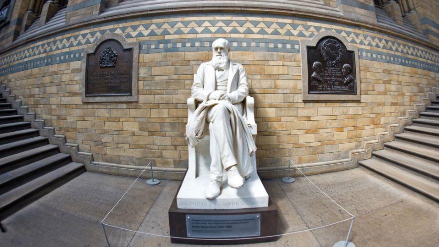 Darwin and Nature's