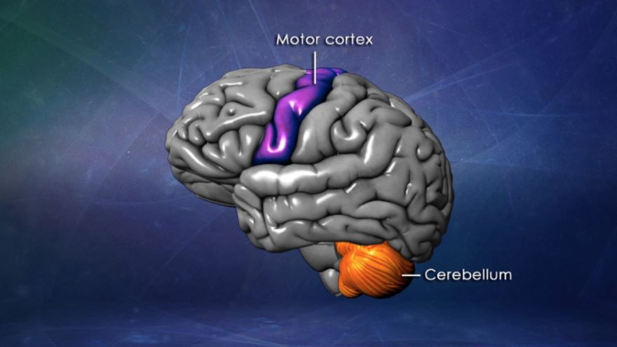 Memory, Mind, and Brain