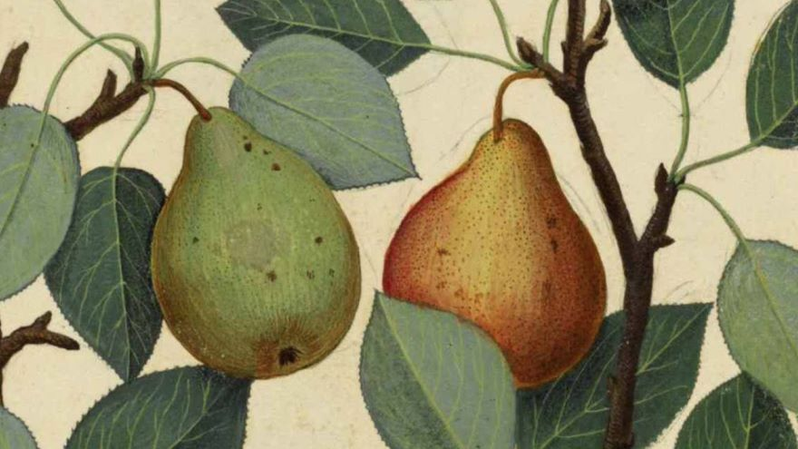 Book II-Stealing Pears: So What?