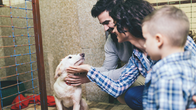 What Should I Look for When Choosing a Dog?