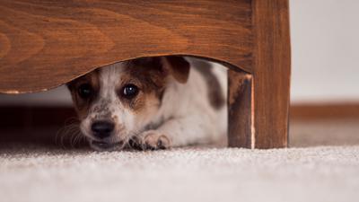 How Do I Help My Anxious Dog during Holidays?
