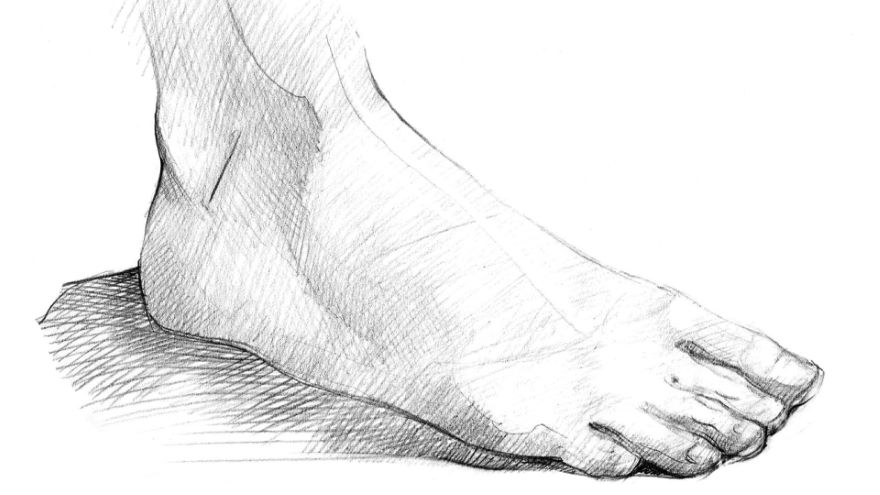 The Figure: The Head, Hands, and Feet