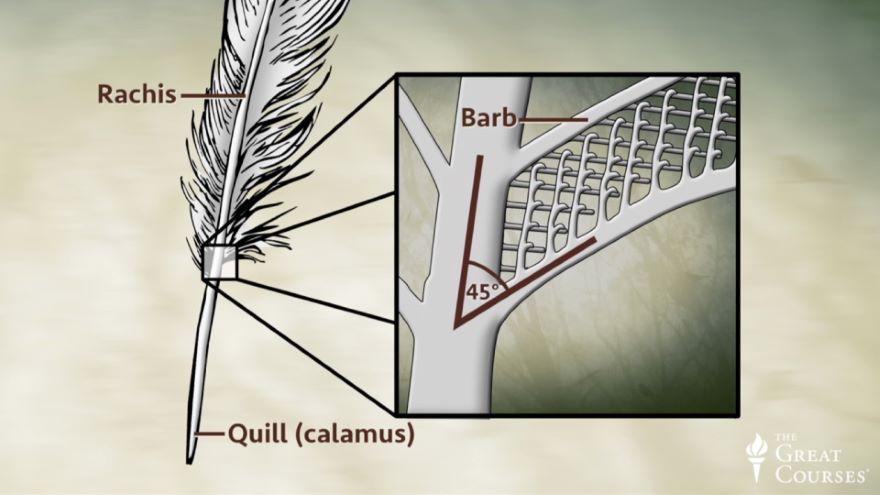 Basic Bird Anatomy
