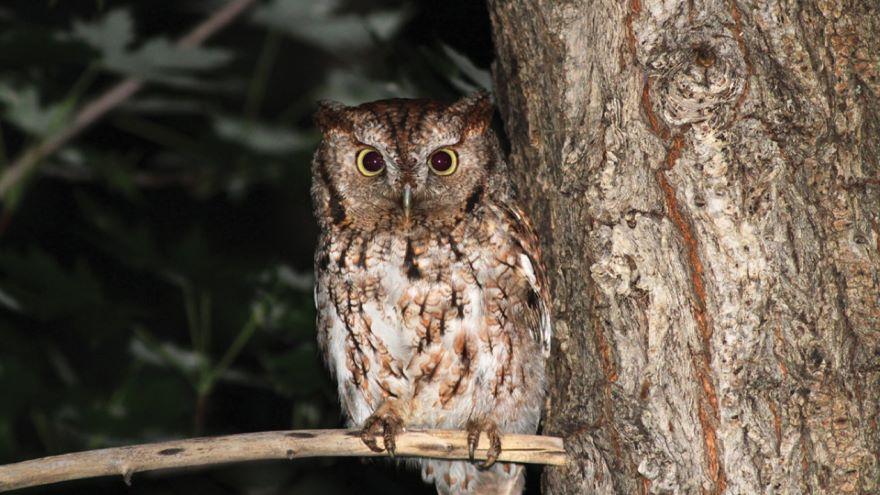 Birding at Night