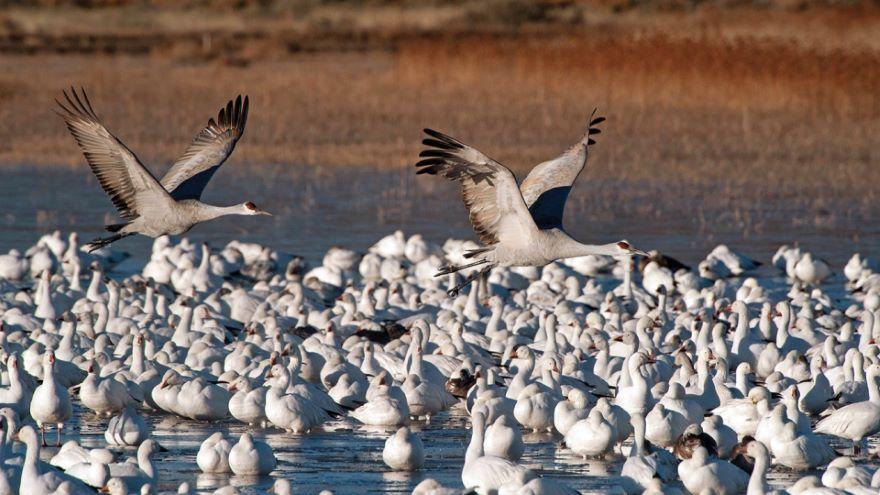 Birding Sites in Western North America