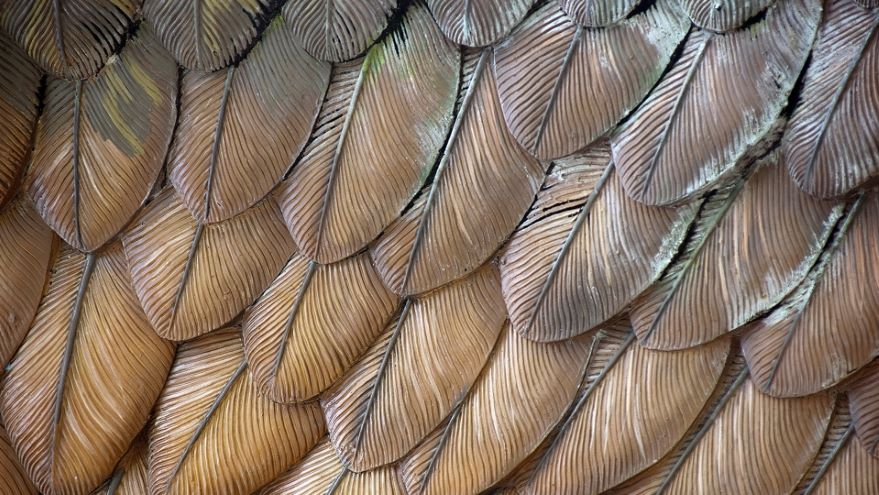 Birds and Boeings: The Magic of Flight