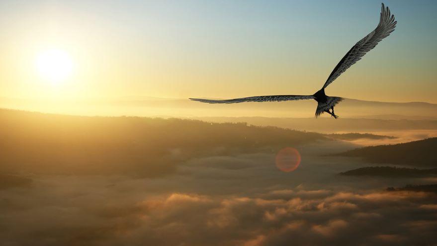 Burning Bright: Avian Adaptations for Flight