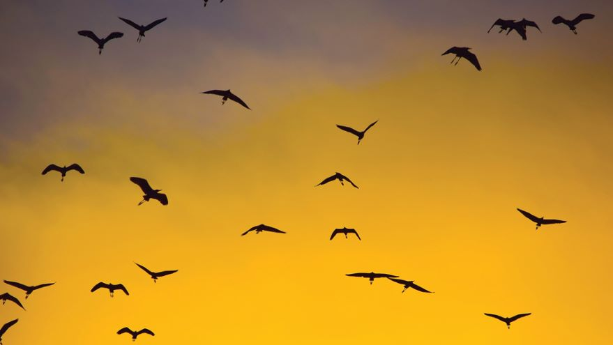 Birds of a Feather: Flocking and Foraging