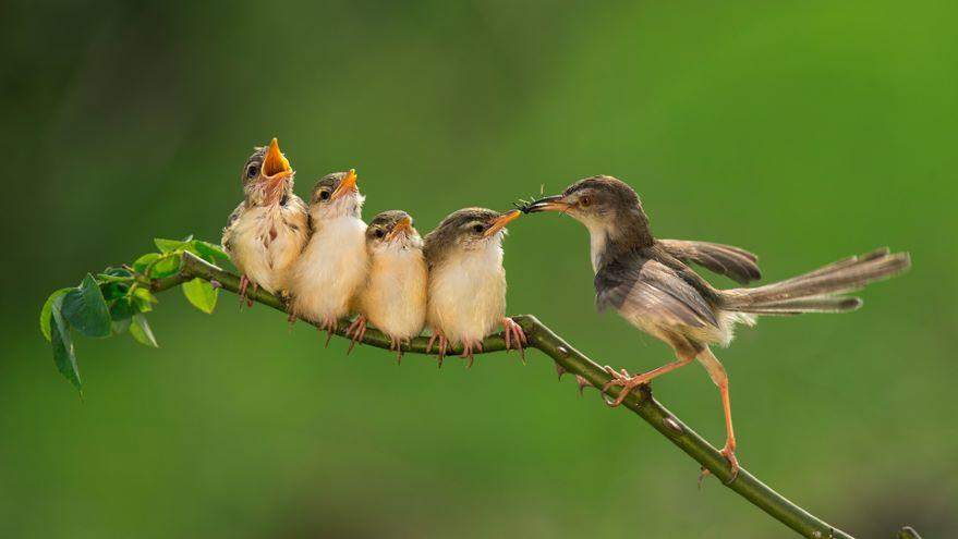 Parental Care: Bird Family and Friends