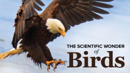 The Scientific Wonder of Birds