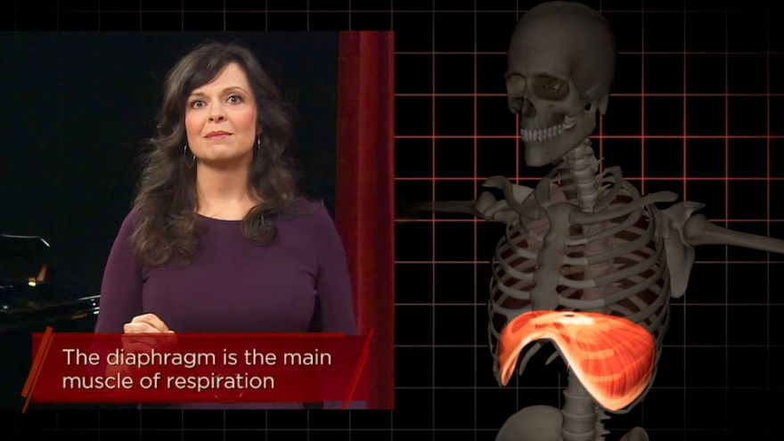 The Anatomy and Physiology of Breath