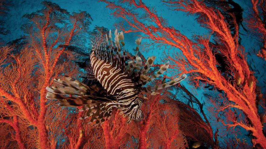Photographing Life in the Sea