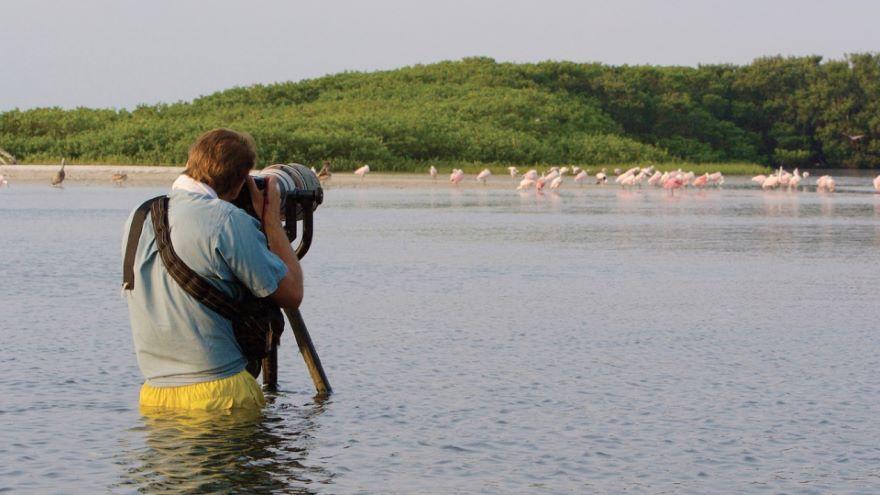 Camera Traps for Elusive Wildlife