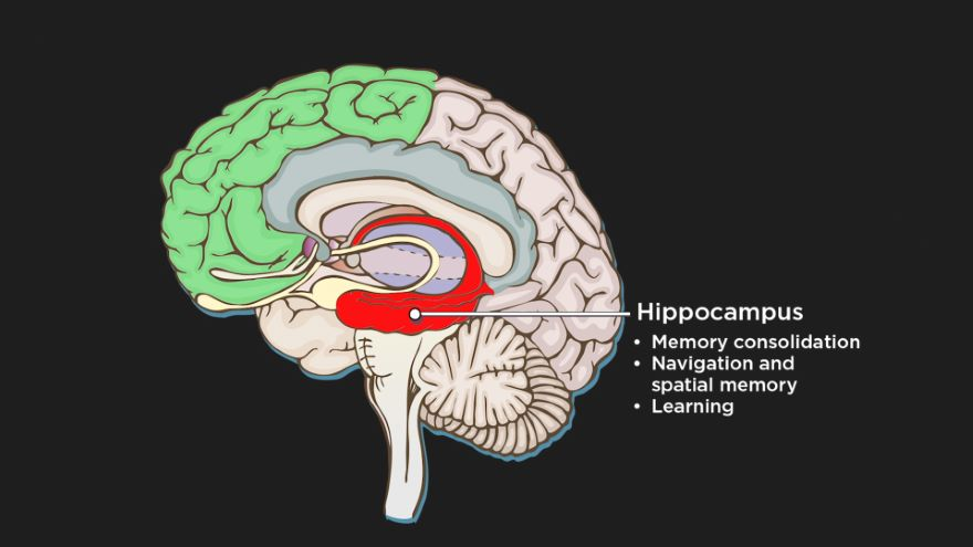 How Happiness Is Created in the Brain